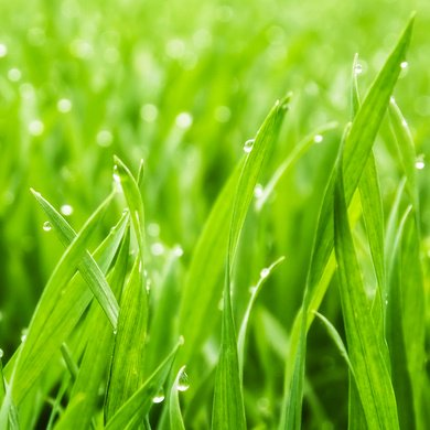 Blades of Grass: Thoughts on Leadership and Japanese Kaizen